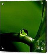 All In Green Acrylic Print