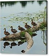 All Lined Up Acrylic Print