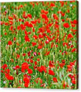 All Red Flower Beautiful Acrylic Print by Boon Mee