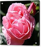 All Shades Of Pink Acrylic Print