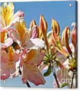 All Stages Of Bloom Acrylic Print