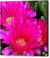 All The Flower Petals In This World 4 Acrylic Print