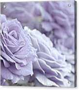 All The Lavender Roses Acrylic Print