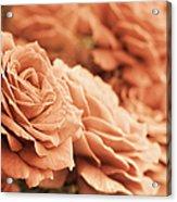 All The Orange Roses Acrylic Print