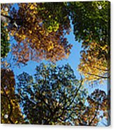 All The Trees Of The Forest Acrylic Print