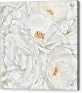 All The White Roses  Acrylic Print