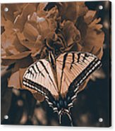 All Things Become New Acrylic Print