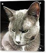 Alley Cat. Acrylic Print