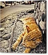 Alley Cat Siesta In Grunge Acrylic Print by Meirion Matthias