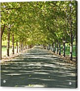 Alley Of Trees On A Summer Day Acrylic Print