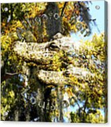 Alligator Bait Acrylic Print