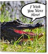 Alligator Greeting Card Acrylic Print