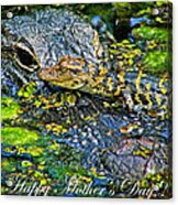 Alligator Mother's Day Acrylic Print