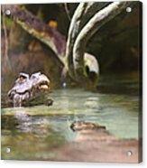 Alligator - National Aquarium In Baltimore Md - 12121 Acrylic Print