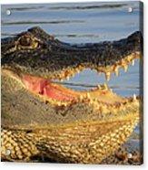 Alligator's  Mouth Acrylic Print