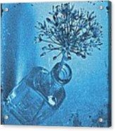 Allium Cyanotype Acrylic Print