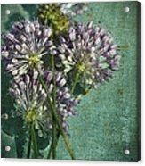 Allium Wildflower With Grunge Textures Acrylic Print