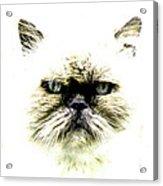 'allo Kitty Acrylic Print