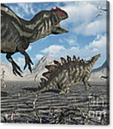 Allosaurus Dinosaurs Moving In To Kill Acrylic Print