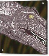 Allosaurus Acrylic Print
