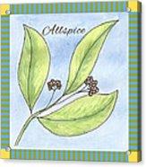 Allspice Illustration Acrylic Print