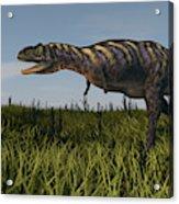 Alluring Aucasaurus In Grassland Acrylic Print