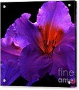 Alluring Azaleas Acrylic Print