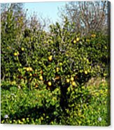 Almanzora Mountain Lemons Winther Spain Acrylic Print