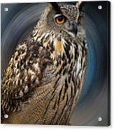 Almeria Wise Owl Living In Spain  Acrylic Print
