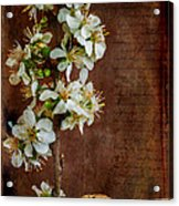 Almond Blossom Acrylic Print by Marco Oliveira