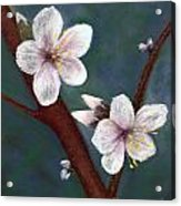 Almond Blossoms Acrylic Print