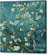 Almond Blossoms' Reproduction Acrylic Print
