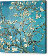 Almond Branches In Bloom Acrylic Print