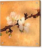 Almond Flowers Acrylic Print