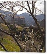 Almond Tree And Monastery   #9815 Acrylic Print