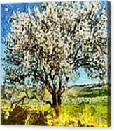 Almond Tree Acrylic Print