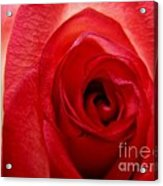 Almost Red Acrylic Print