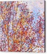Almost Winter Acrylic Print