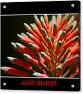 Aloe Bloom Window Acrylic Print