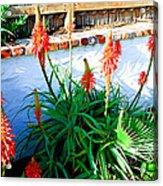 Aloe In Bloom Acrylic Print