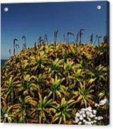 Aloe Is Anyone There Acrylic Print
