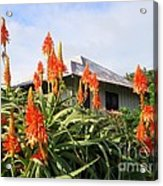 Aloe Vera And Tin Roof Plantation House Acrylic Print