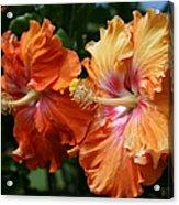 Aloha Keanae Tropical Hibiscus Acrylic Print