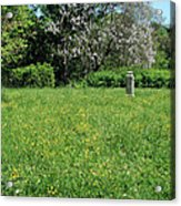 Alone In A Field Of Buttercups Acrylic Print