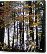 Alone In The Mist Acrylic Print