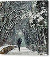 Alone In The  Winter Acrylic Print