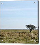 Alone Tree At A Coastal Grassland Acrylic Print