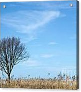 Alone Tree In The Reeds Acrylic Print