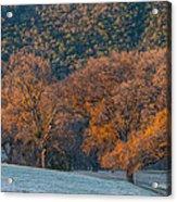 Along Miwok Trail In Winter Acrylic Print