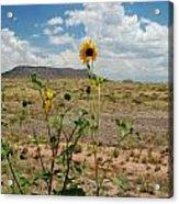 Along Route 66 In Arizona Acrylic Print